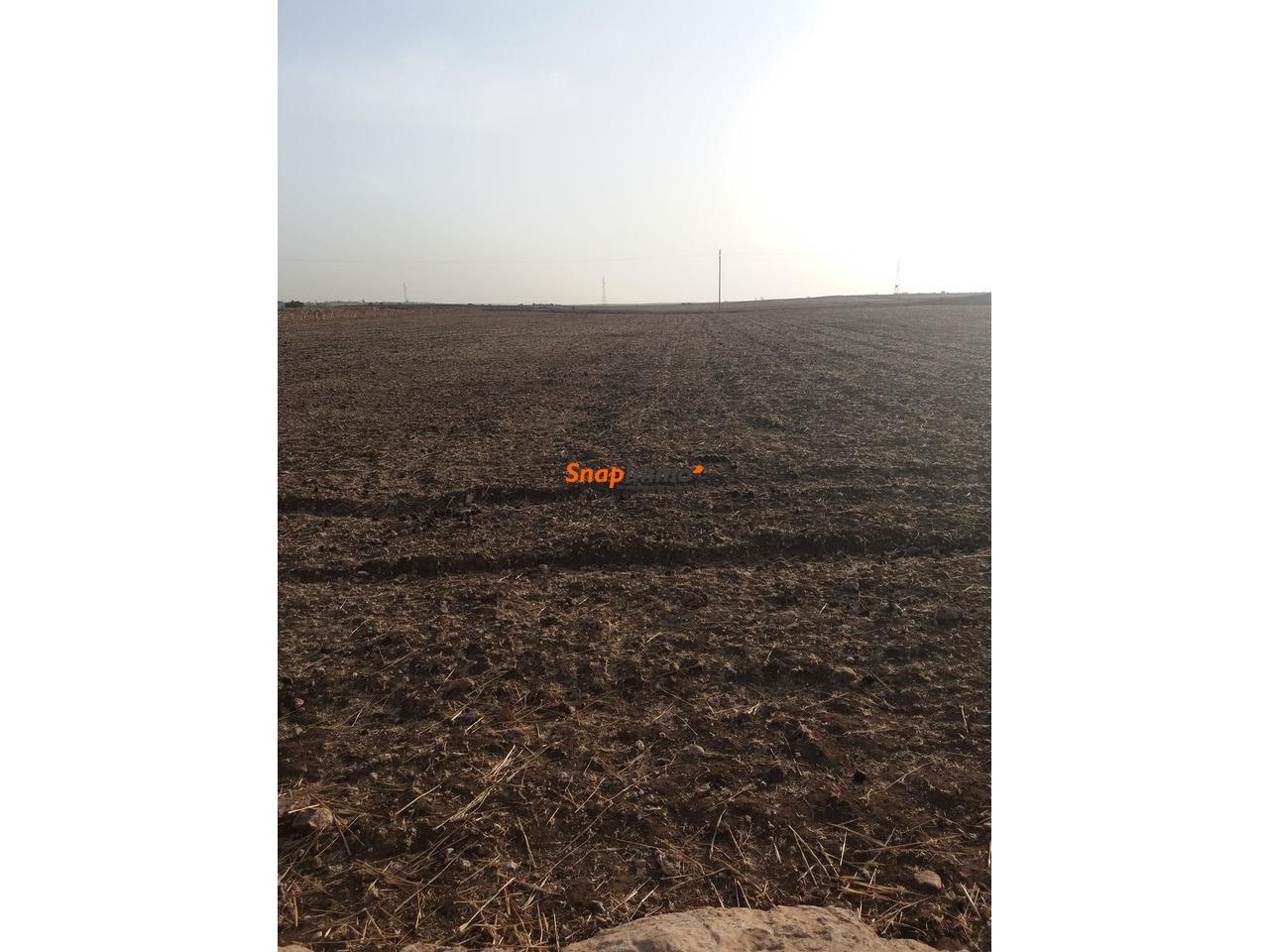 Terrain 1.5 hectare o nase a sidi ismail el jadida - 2/4