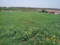 Terrain Kenitra banlieue
